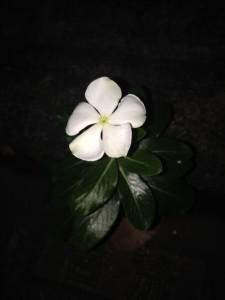My good luck flower.